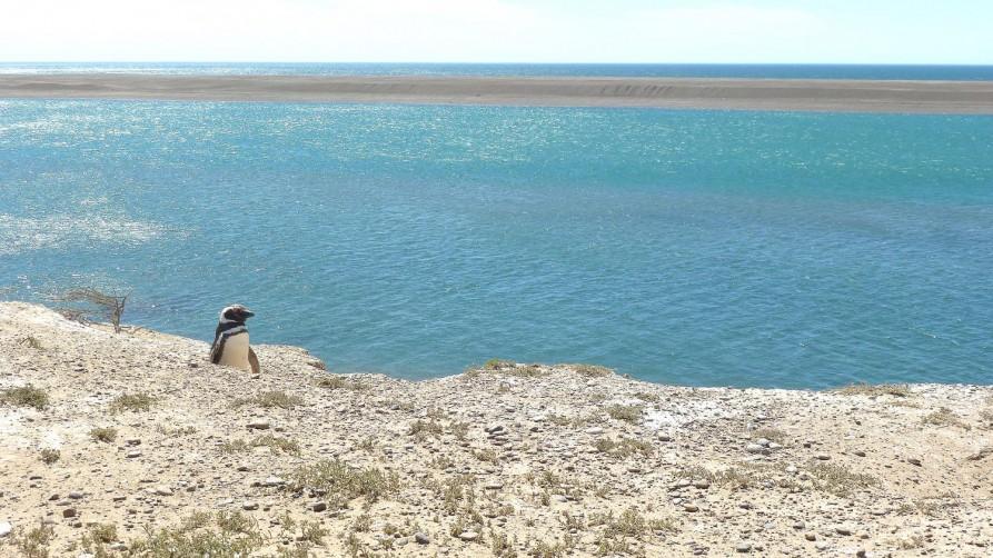 Puerto Madryn, Argentinien