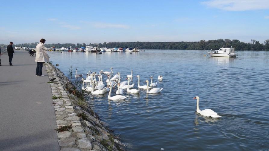 Donau, Belgrad, Serbien
