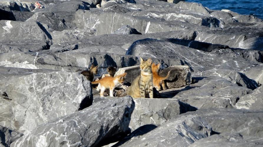 Katzen, Istanbul