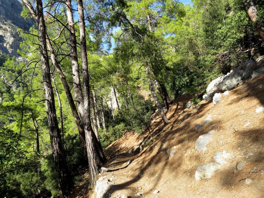 Wald, der Lykische Weg