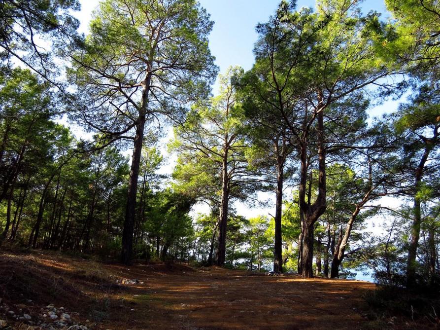lykischer Wald