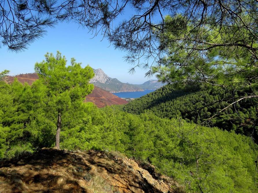 Wald und Mittelmeer