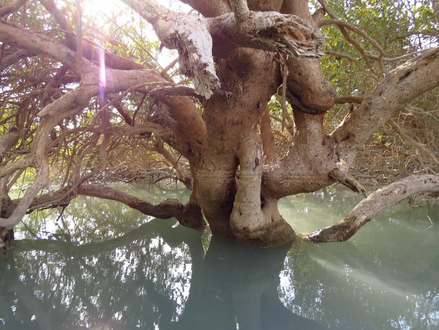 Mangrovenwald auf Qeshm