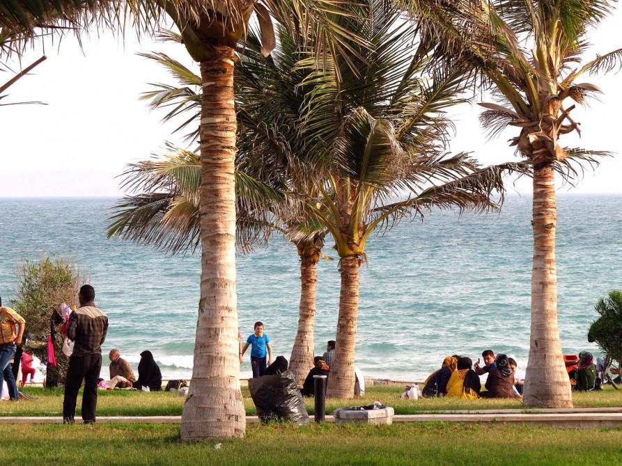Palmen am Strand von Qeshm Town