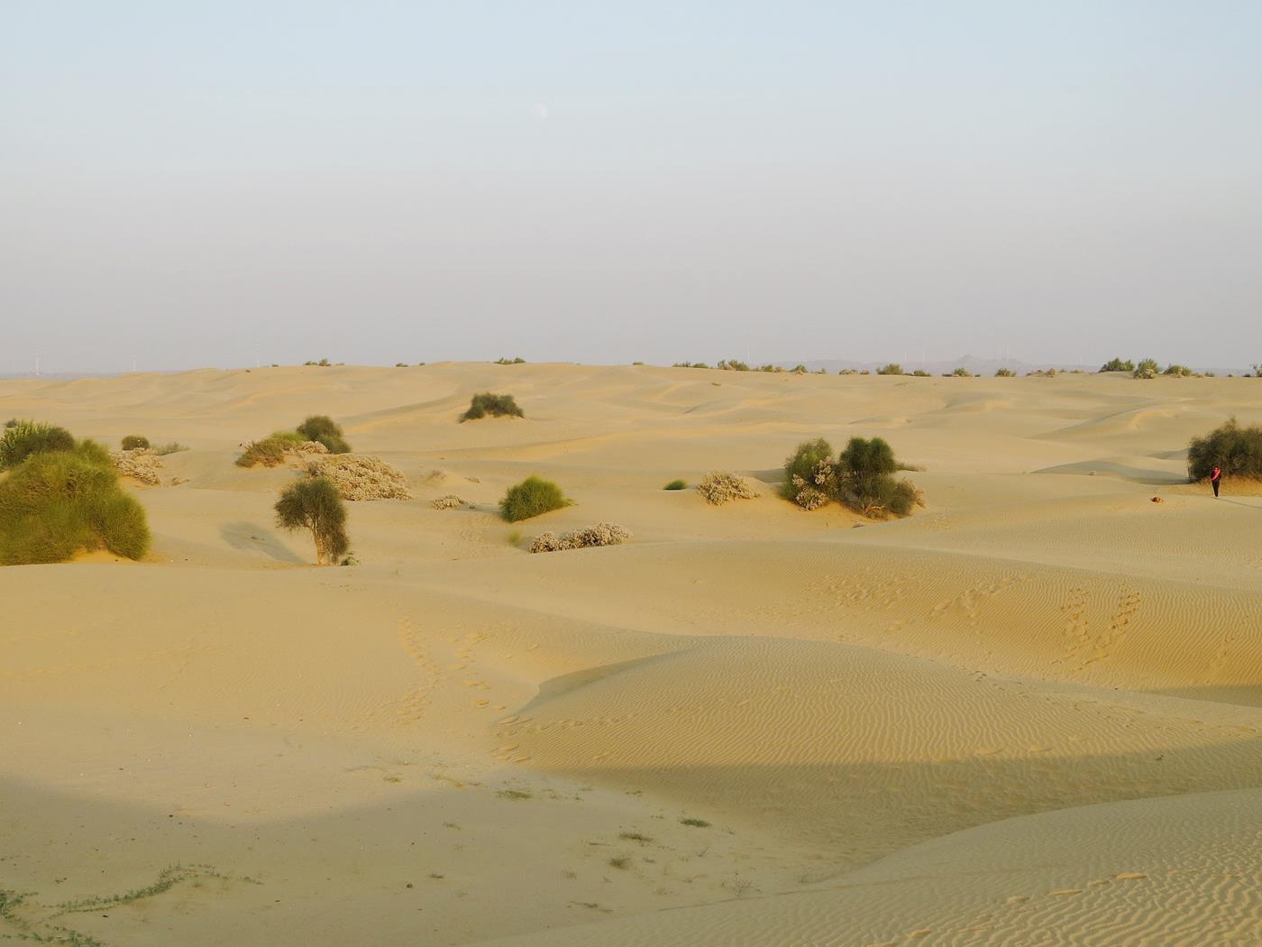 Kamelsafari, Jaisalmer