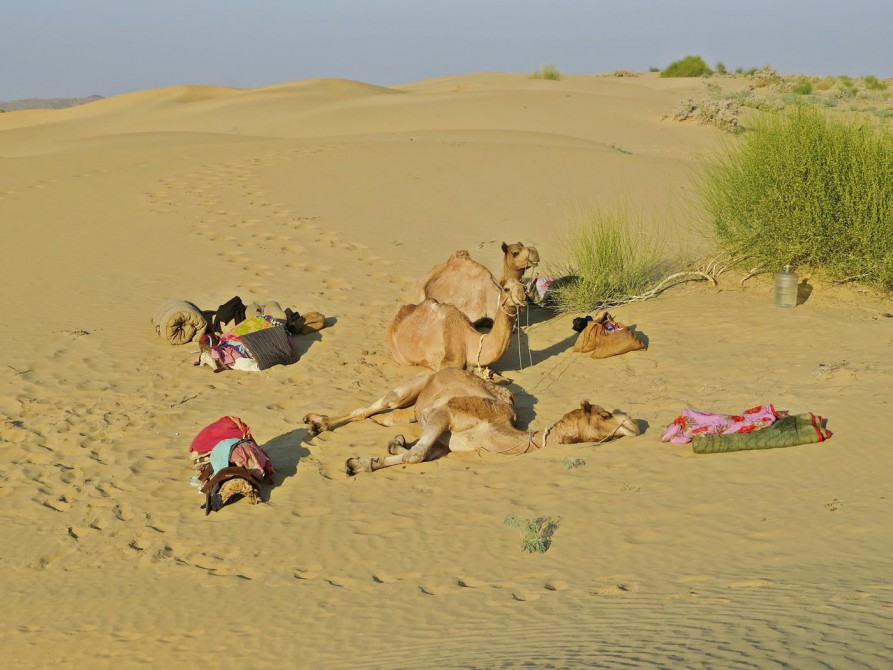 Kamele und Lagerplatz in der Wüste Thar