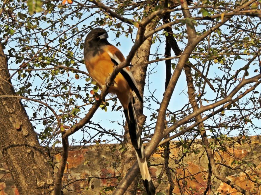 Ranthambore Nationalpark