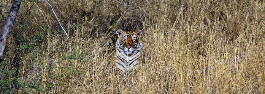 Mit Mr. Bond im Ranthambore Nationalpark
