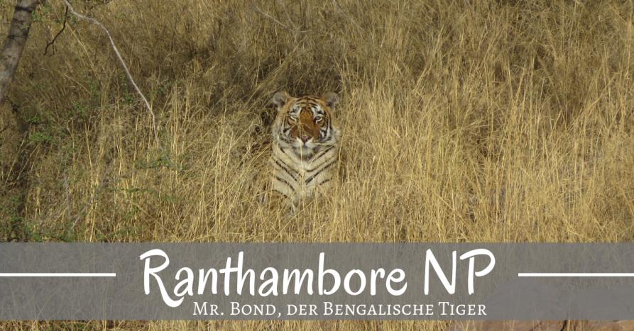 Mit Mr. Bond im Ranthambore Nationalpark