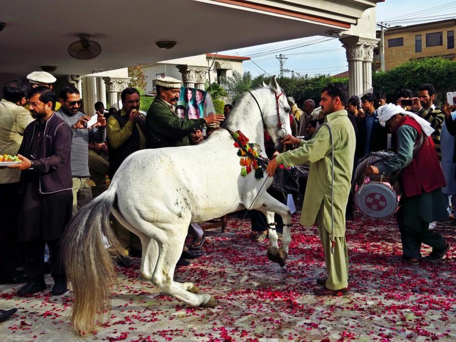 ein tanzendes Pferd zu Ehren des neuen Senators