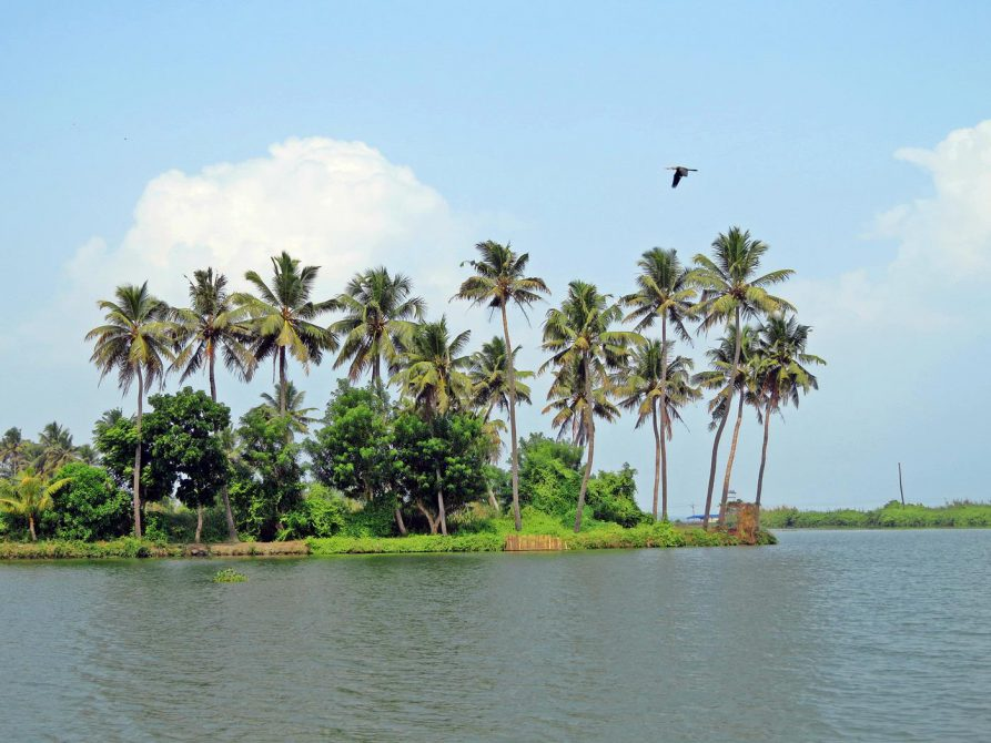 Palmen, Backwater, Kerala