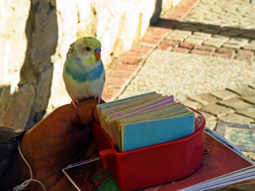 Vogelorakel vor dem Grabmal des Poeten