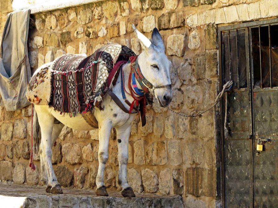 Lastesel in Mardin