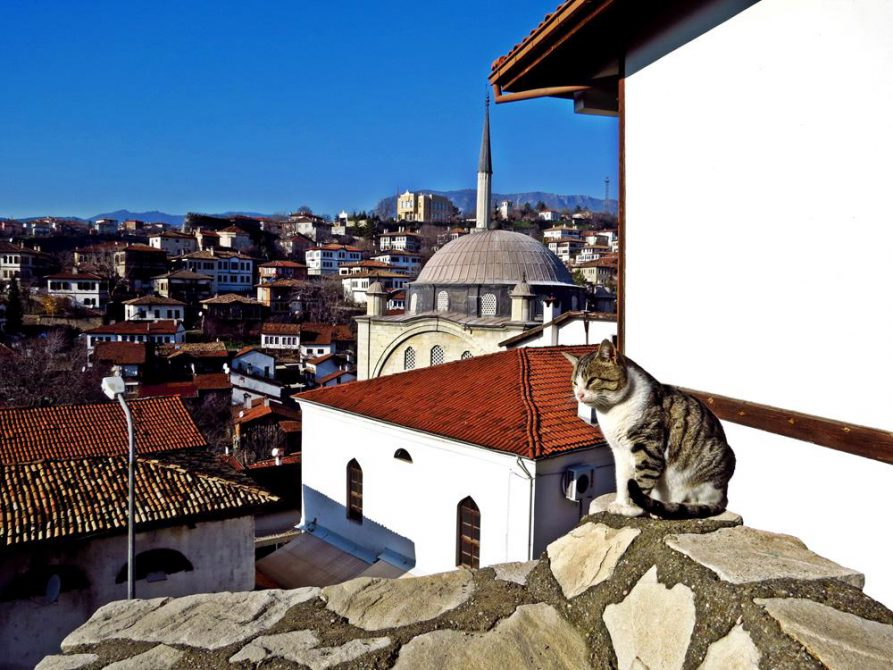 Katze über den Dächern von Safranbolu