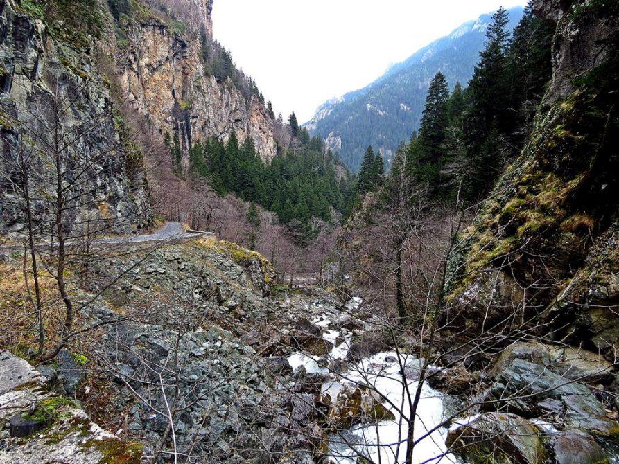 Flussbett und Kiefernwald