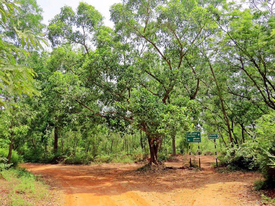 erdige Pfade und Straßen im Wald von Auroville