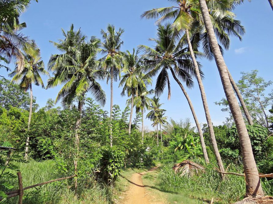sandige Wege auf der Discipline Farm in Auroville