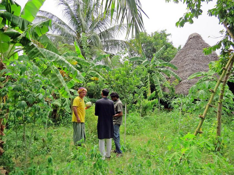 Auroville, Permakultur, Solitude Farm