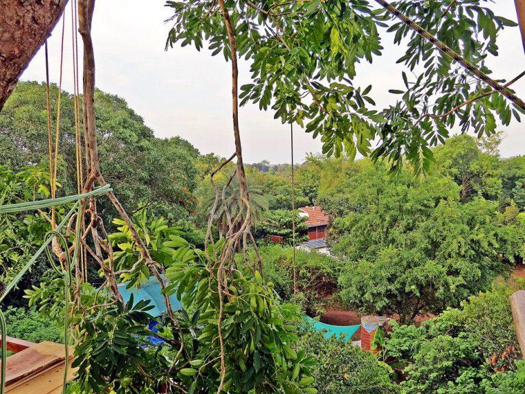 Auroville, Wald