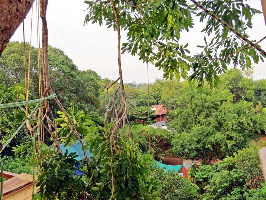 Blick aus der Baumkrone über den Wald von Auroville