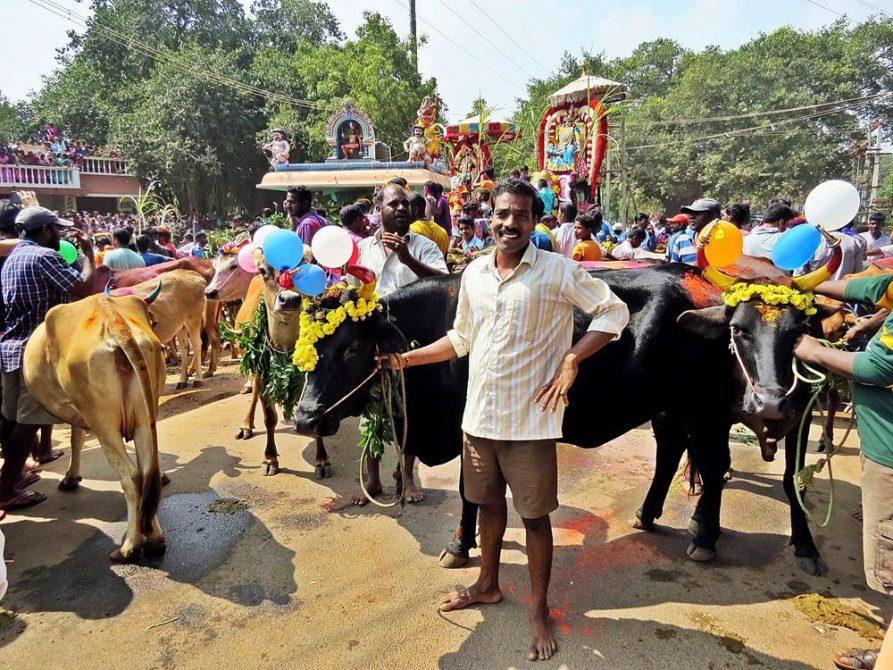 Pongal-Feier im Dorf Kuilapalayam, Auroville