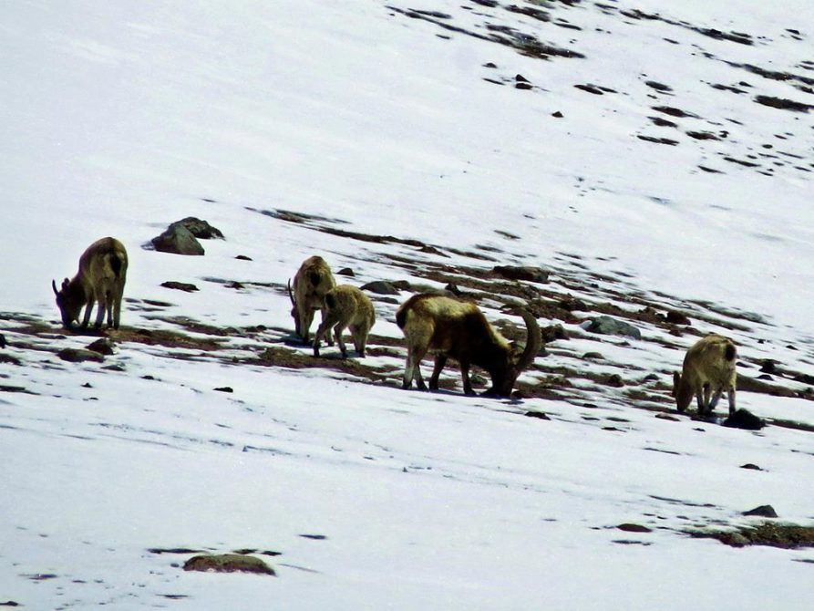 Khunjerab Pass, Karakorum Highway, Pakistan