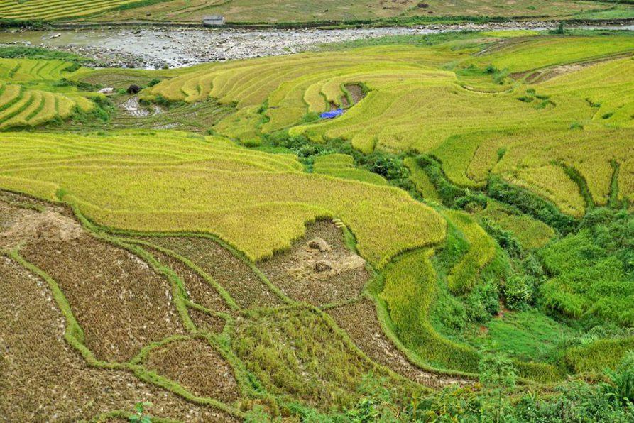 Sapa, Vietnam, Reisernte