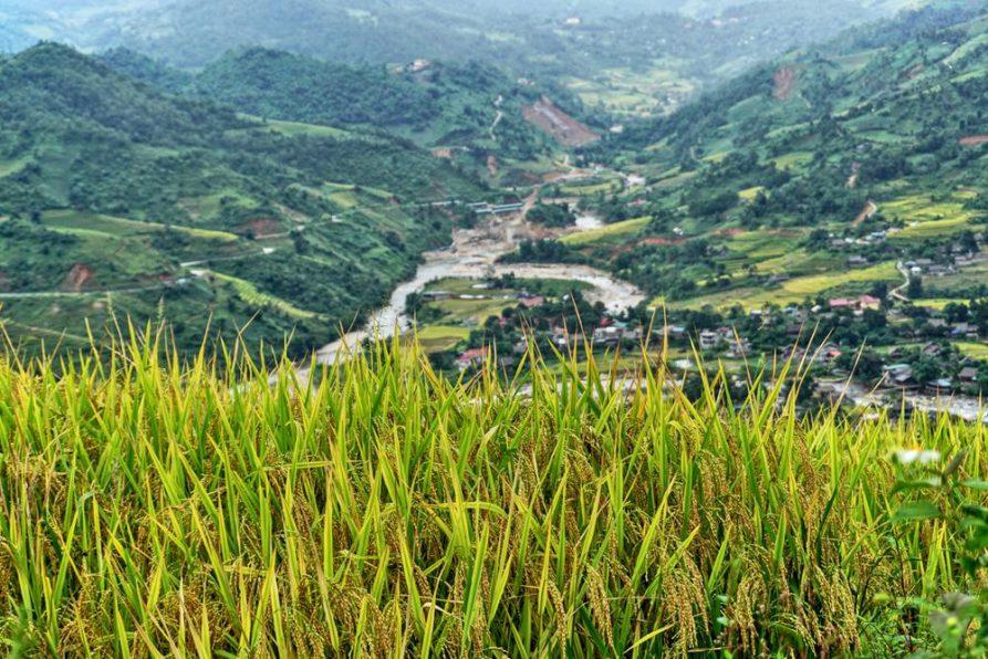 Sapa, Vietnam, Reis
