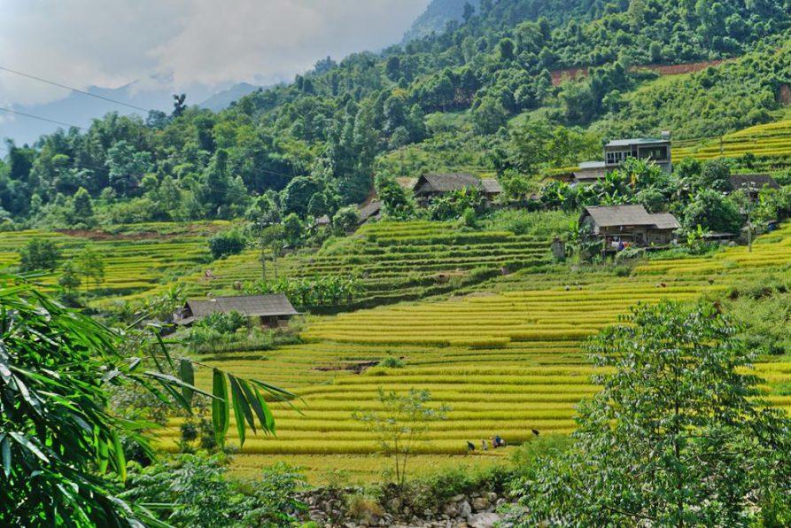 Sapa, Vietnam, Reisterrassen