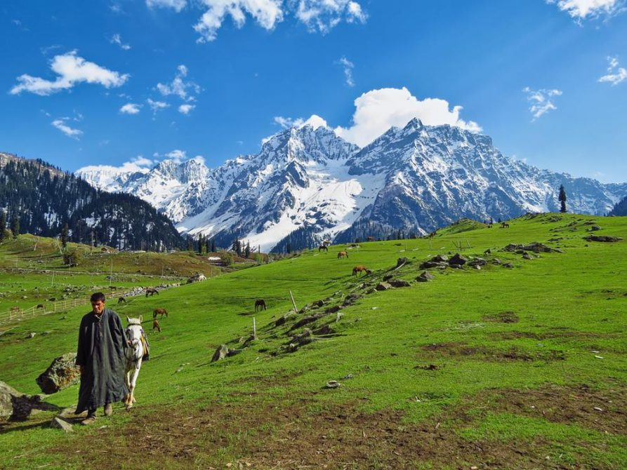 Almwiese, Sonamarg, Himalaja, Indien