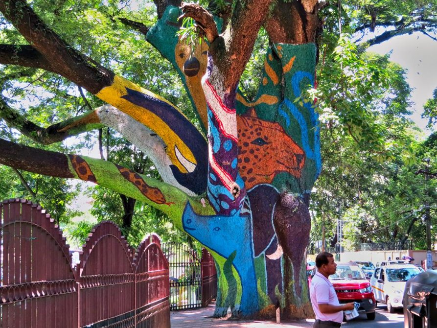 Baum Trippinˈ in Guwahati