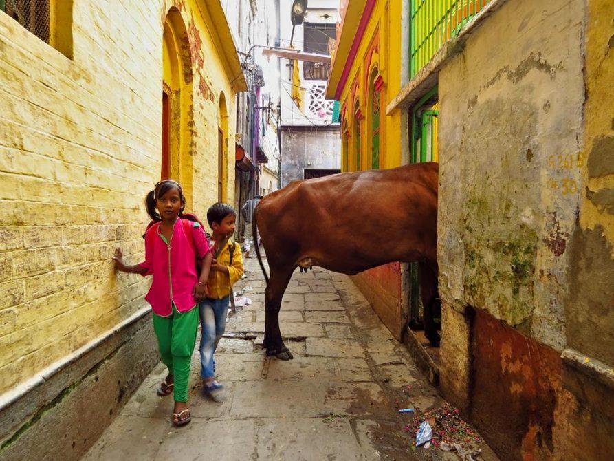 Kuh und Kinder in der Altstadt von Varanasi