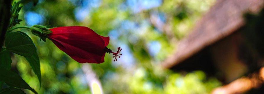 Ayurveda – die große Einölung