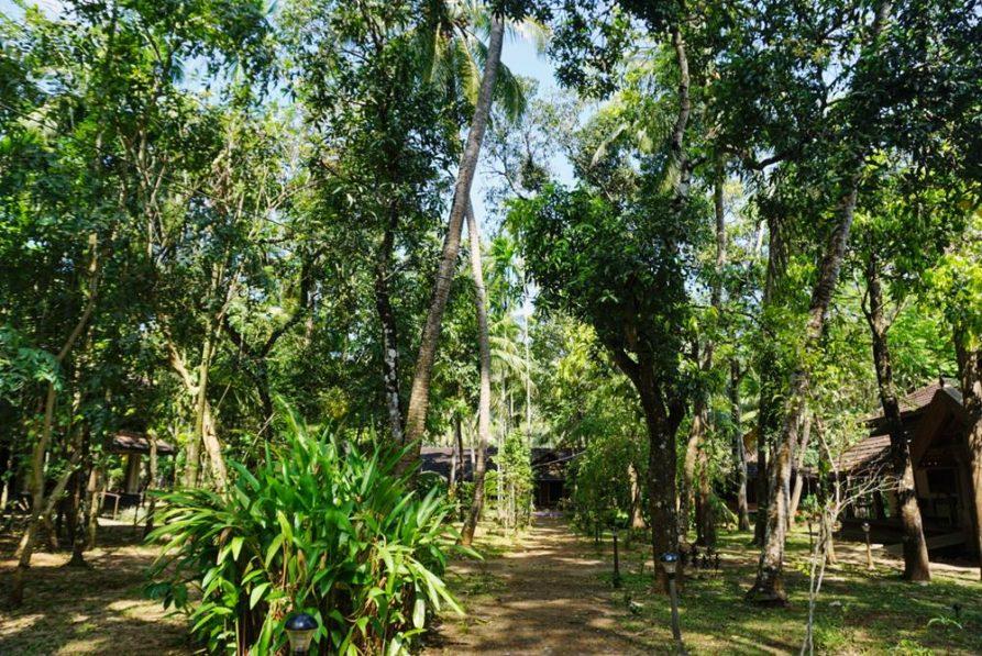 Garten im Ayurveda Mana Resort