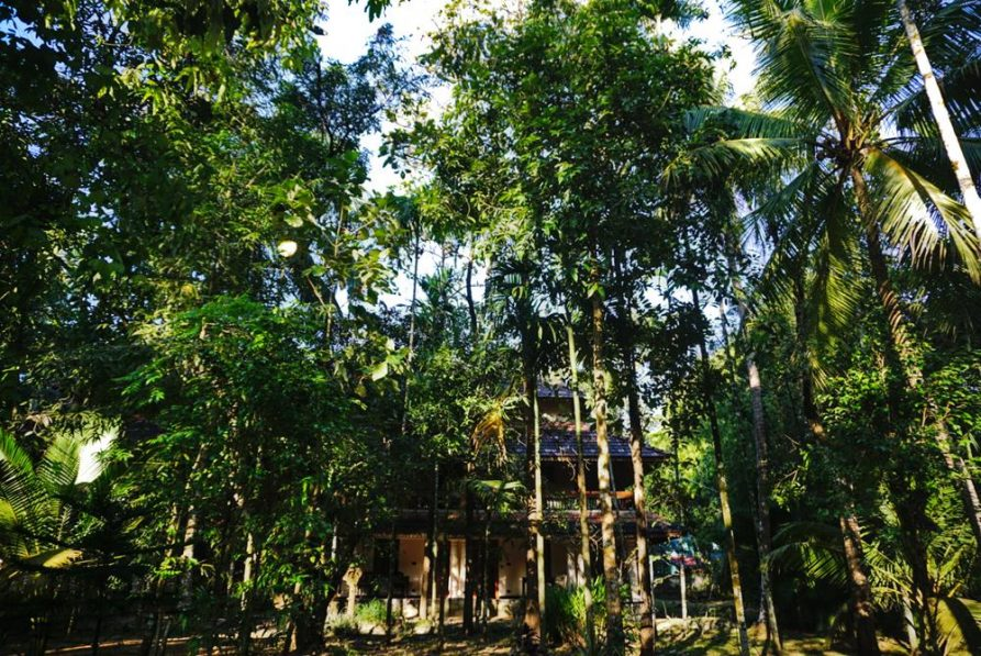 Unterkunft hinter hohen Bäumen
