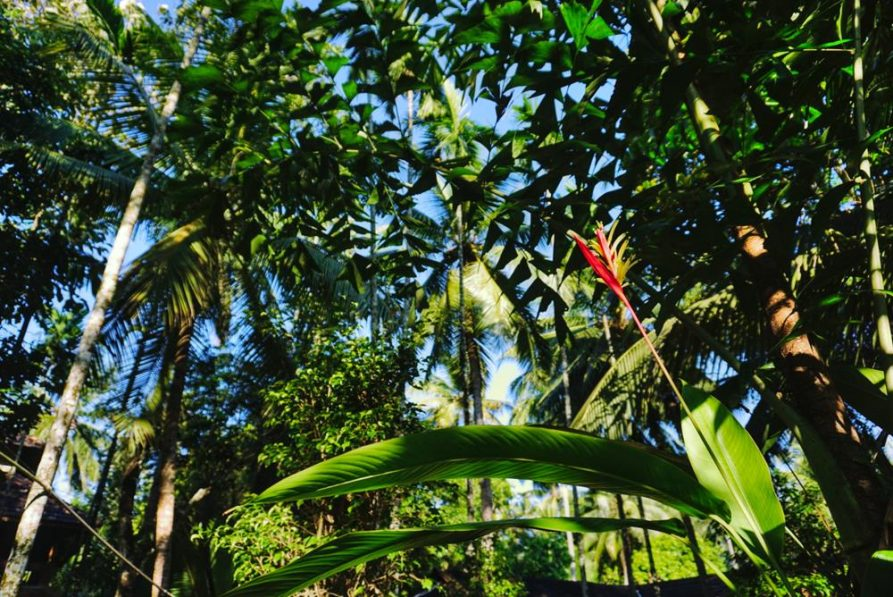 tropischer Garten, Ayurveda, Kerala