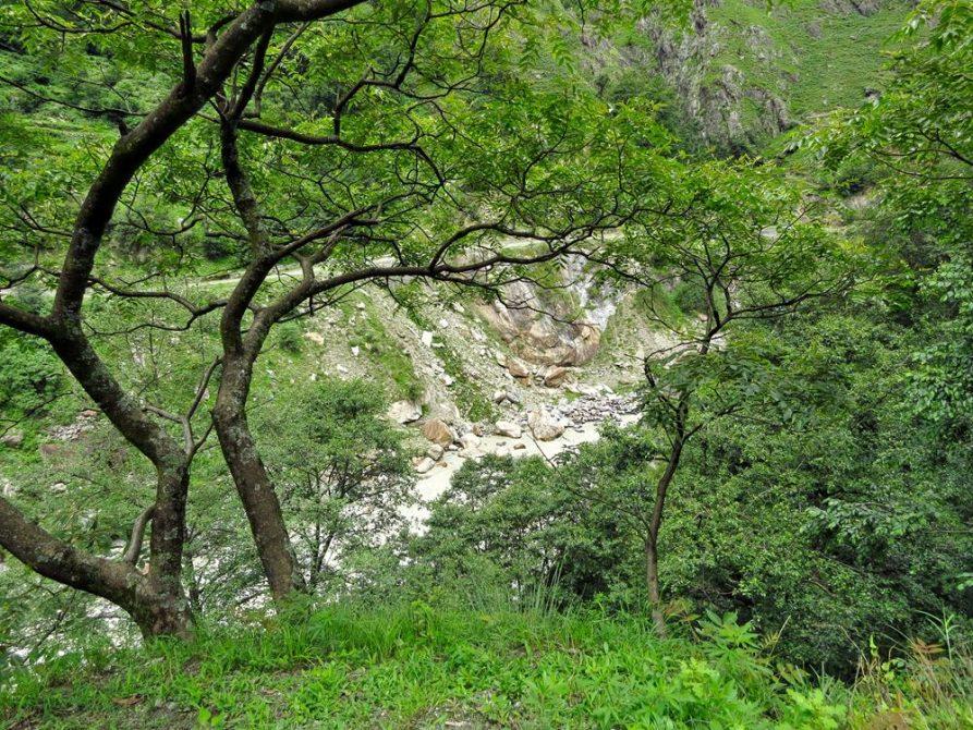 Wald in Himashal Pradesh