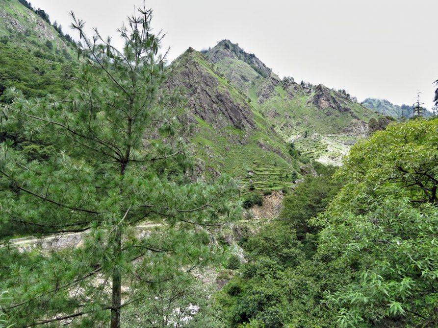 kurvige Straßen führen durch die bewaldeten Berge in Himashal Pradesh