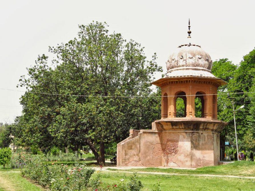 Rosengarten, Amritsar, Indien
