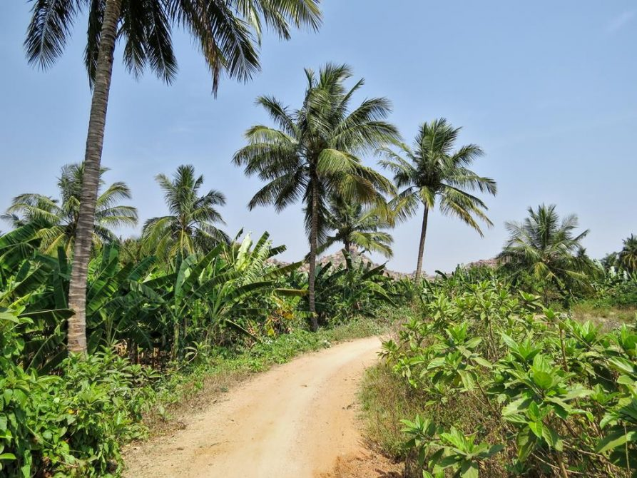 Palmen und Bananen am Wegrand, Indien
