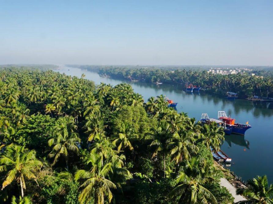 Palmenwald und Fluss, kerala, Indien
