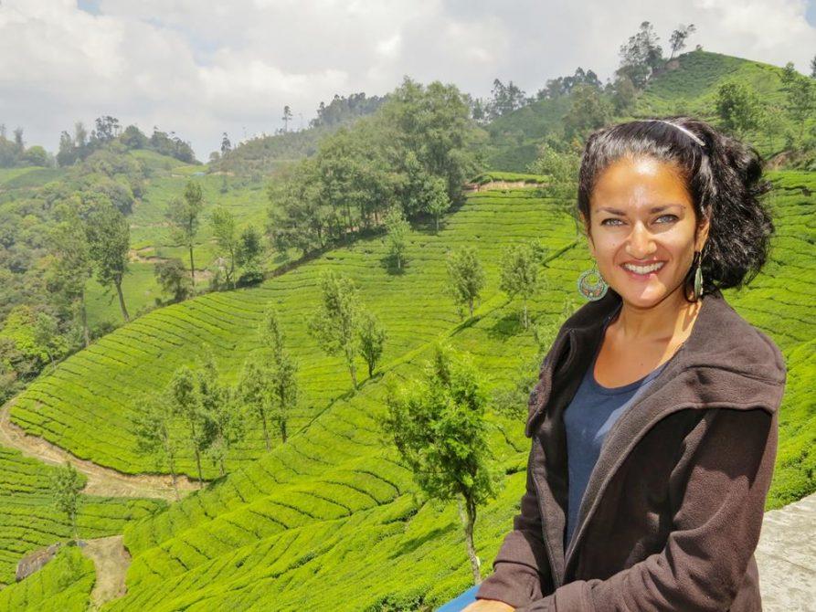 Teeplantage, Westghats, Kerala, Indien