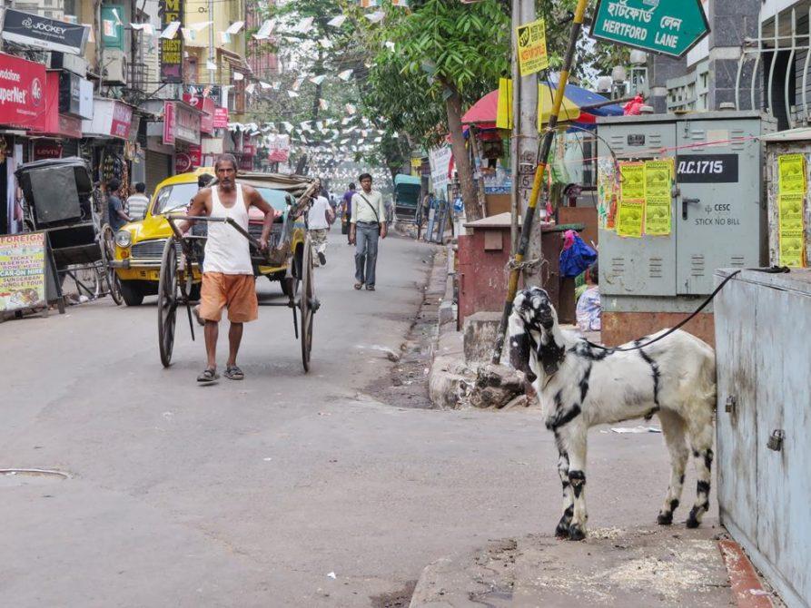 Rikscha-Wallah, Kolkata, Indien