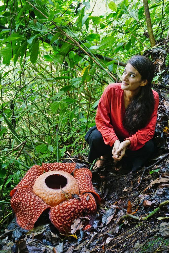 Rafflesia arnoldii mit Frau, Sumatra, Indonesien