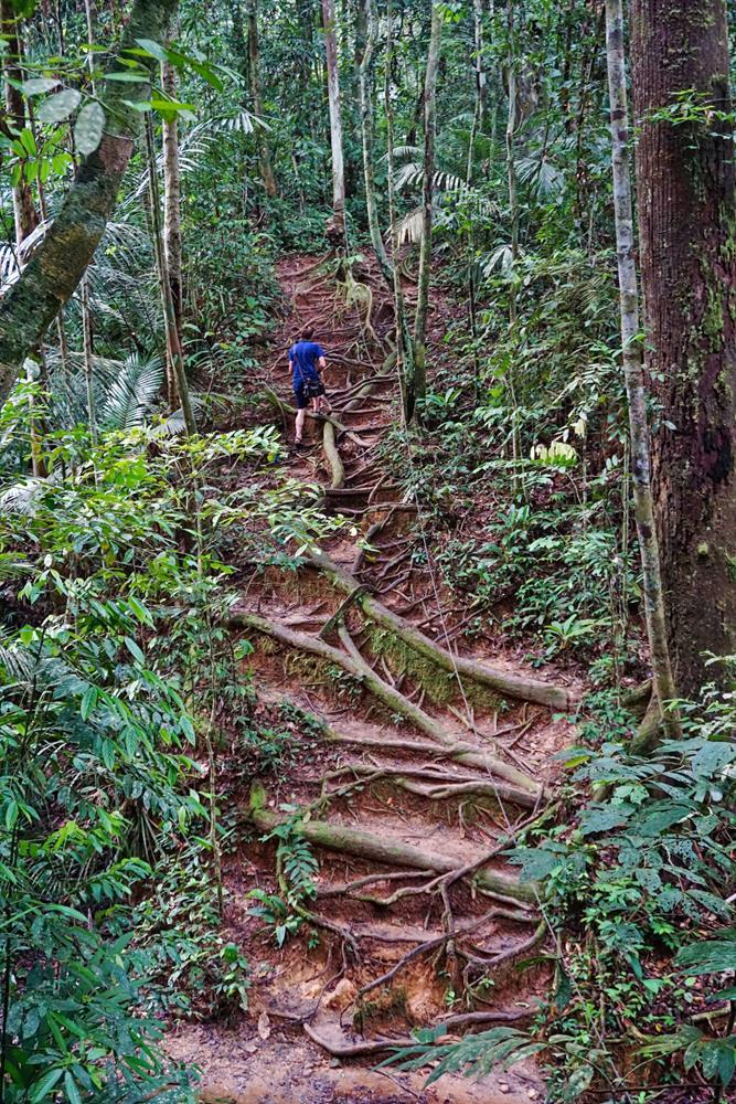 Mann wandert im Urwald, Taman Negara, Malaysia
