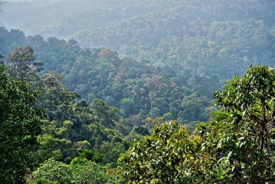 ältester Regenwald der Welt, Taman Negara, Malaysia