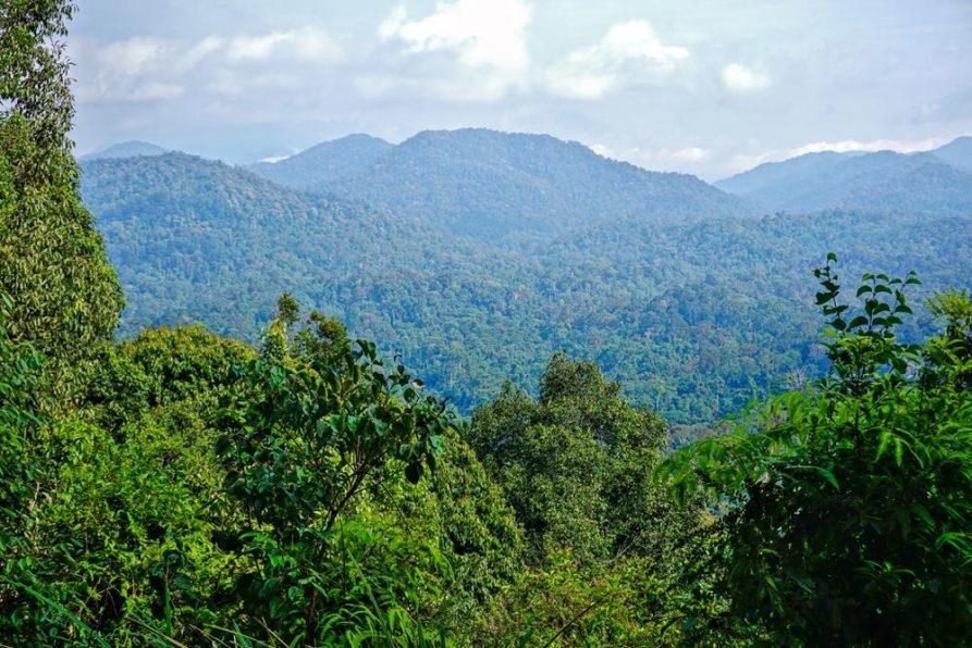 Taman Negara, ältester Wald, Malaysia