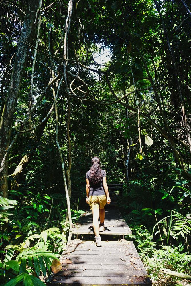 Frau spaziert im Regenwald, Taman Negara, Malaysia