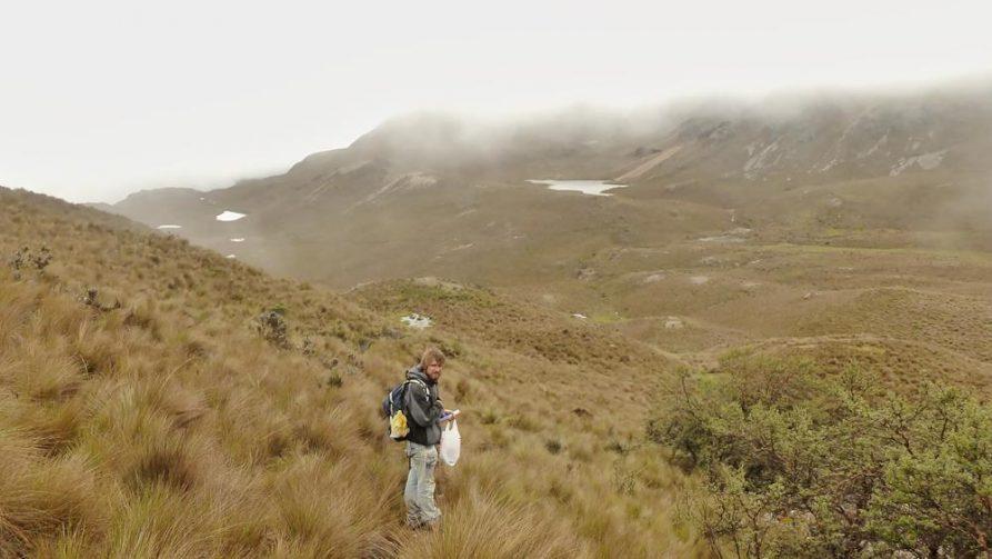 Nationalpark Cajas, Ecuador