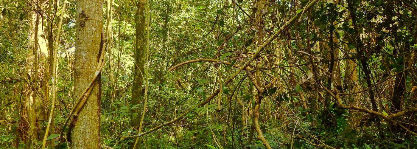 Naturreservat Mbaracayu, Paraguay, Titel